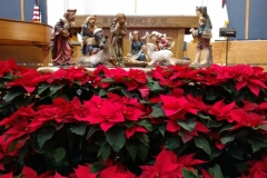 Poinsettias 19 Dec 2016-01365